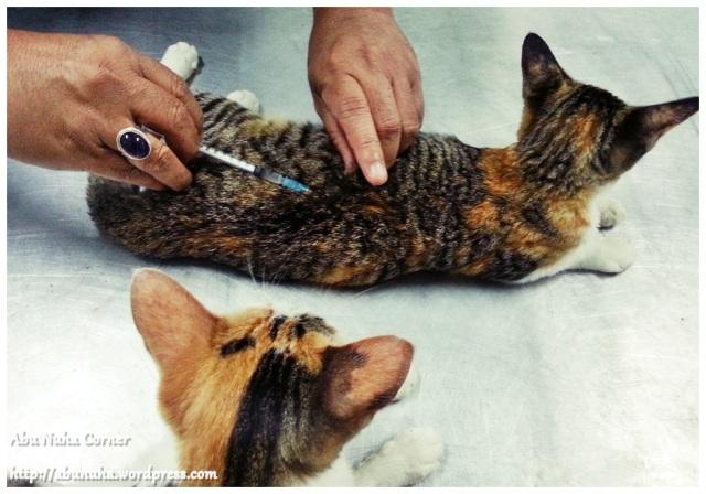 Meow (3)