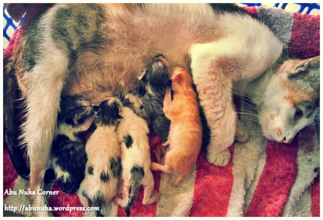 6 baby (4)