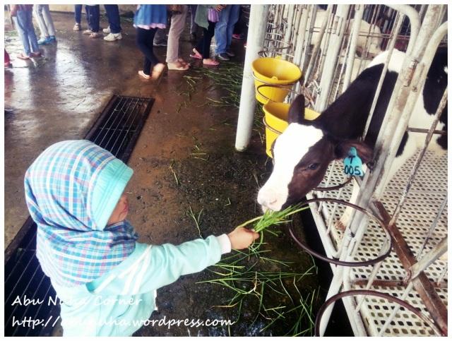 DairyFarm (10)