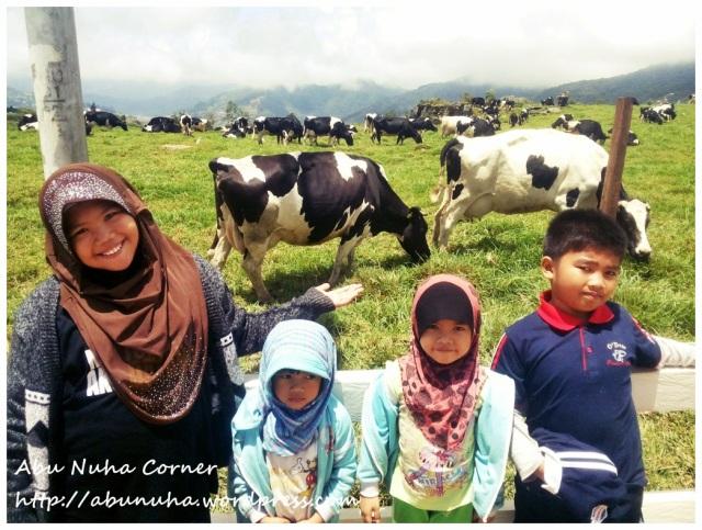 DairyFarm (4)