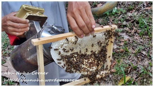 Lebah (1)