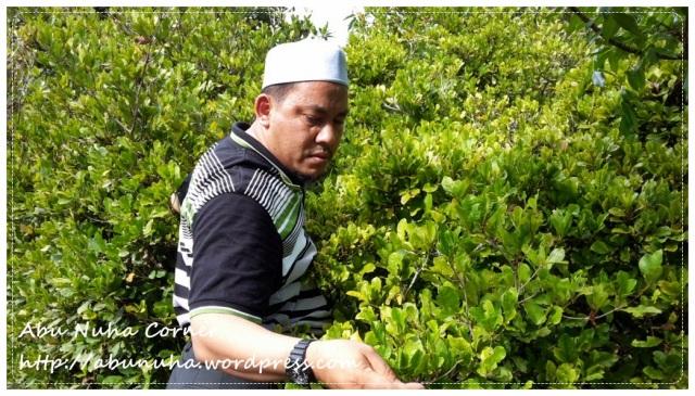 Taman Pertanian Sabah @ Tenom (17)