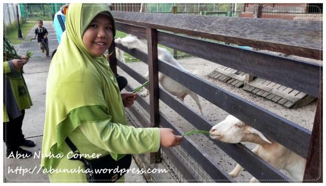 Taman Pertanian Sabah @ Tenom (26)