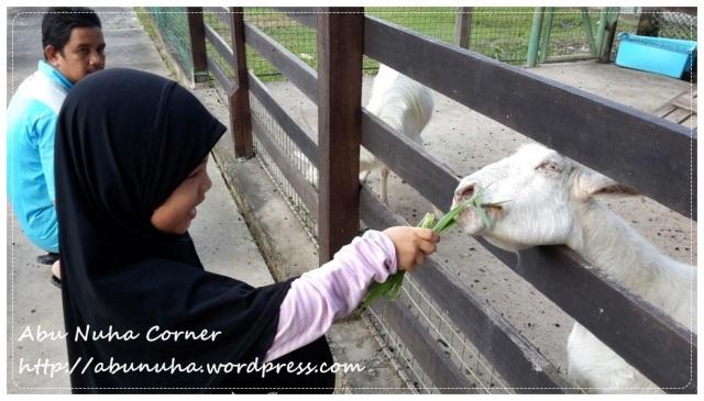 Taman Pertanian Sabah @ Tenom (27)